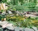 diy-pond