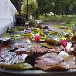 tropical-lily-bins