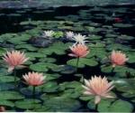 hardy-lilies